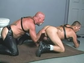 muscle bear leather dads horny sex - Steve Titpig Hurley and Dale West